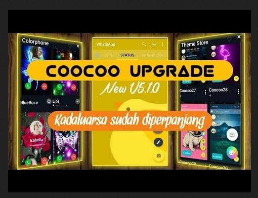 Coocoo Whatsapp5